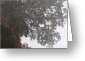 Biggest Tree Greeting Cards - Giant Sequoia ll Greeting Card by Hideaki Sakurai