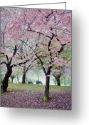 Blossoms Greeting Cards - Gifts Greeting Card by Mitch Cat