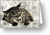 Fine Art Cat Greeting Cards - Giggle Kitty  Greeting Card by Andee Photography