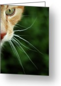 Green Eyes Greeting Cards - Ginger Cat Face Greeting Card by If I Were Going Photography - Leonie Poot