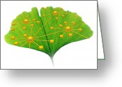 Image Overlay Greeting Cards - Ginkgo And Network Diagram Greeting Card by Pasieka