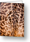 Tanzania Greeting Cards - Giraffe Butt Greeting Card by Adam Romanowicz