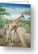 Dirt Road Greeting Cards - Giraffe Crossing Road In Masai Mara Greeting Card by Mehmed Zelkovic