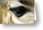 Lashes Greeting Cards - Giraffe Eye Reflection Greeting Card by Carolyn Marshall