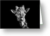 Head Greeting Cards - Giraffe In Black And White Greeting Card by Malcolm MacGregor