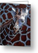 Giraffe Greeting Cards - Giraffe Greeting Card by John Lautermilch