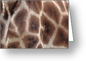 \\\\hair Color\\\\ Greeting Cards - Giraffes Hide Greeting Card by John Foxx