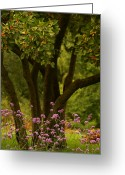 Tree Prints Greeting Cards - Give Life a Chance - v02 Greeting Card by Aimelle