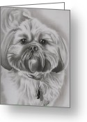 Wolves Drawings Greeting Cards - Gizmo - Shih Tzu Dog Breed Greeting Card by Fred Larucci