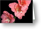 Gladiolus Greeting Cards - Gladiolus Bloom Greeting Card by Alpha Pup