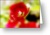 Flowers Photographs Greeting Cards - Gladiolus Greeting Card by Toni Hopper