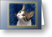 Fine Art Cat Greeting Cards - Glamour Girl Greeting Card by Andee Photography