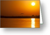 Seagull Photo Greeting Cards - Glides into Evening Greeting Card by Karol  Livote