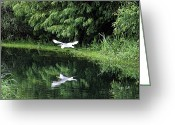 Egret Digital Art Greeting Cards - Gliding Through the Swamp Greeting Card by Suzanne Gaff