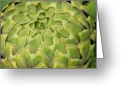 Green Artichoke Greeting Cards - Globe Artichoke (cynara Scolymus) Greeting Card by Tony Craddock