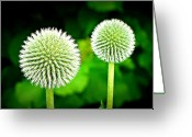 Thistle Greeting Cards - Globe Thistles Greeting Card by The Camera Is My Friend