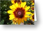 L.a. Woman Greeting Cards - Glorious Daisy Greeting Card by Tim Donovan