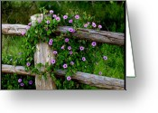 Cedar Fence Greeting Cards - Glorious Morning Greeting Card by James Granberry