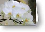 White Orchids Greeting Cards - Glorious Orchid Cascade Greeting Card by Andee Photography