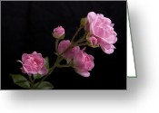 Bold Blossom Greeting Cards - Gloriously Pink Greeting Card by Michael Peychich