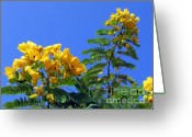 Azure Blue Greeting Cards - Glossy Shower Senna Tree Greeting Card by Yali Shi