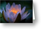Lilly Pad Greeting Cards - Glow in the Lily Greeting Card by Lauren Goia