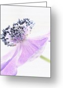 Texture Flower Greeting Cards - Glowing Anemone Greeting Card by Kristin Kreet