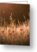 Eavning Greeting Cards - Glowing highlights Greeting Card by Rikard  Olsson