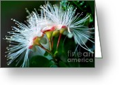Flower Stamen Greeting Cards - Glowing Needles Greeting Card by Kaye Menner