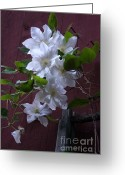 White Greeting Cards - Glowing White Clematis Greeting Card by Lynn-Marie Gildersleeve