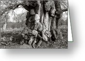 Old Tree Trunk Photo Greeting Cards - Gnarled Tree Greeting Card by Paul Phillips