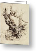 Early Drawings Greeting Cards - Gnarled Tree Trunk Greeting Card by Thomas Cole