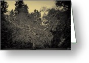Autumn Photographs Greeting Cards - Gnarly Birch Greeting Card by Phill  Doherty