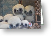 Stuffed Animals Greeting Cards - Go Ahead And Squeeze Me Greeting Card by Jan Amiss Photography