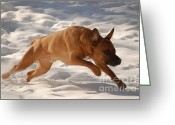 Watch Dog Greeting Cards - Go Greeting Card by Crissy Sherman