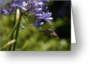 Sausalito Greeting Cards - Go For It Greeting Card by David Armentrout