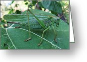 Green Grass Hopper Greeting Cards - Go Green  Greeting Card by Eric Kempson