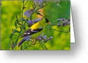 Seed Mixed Media Greeting Cards - Gold Finches-11 Greeting Card by Robert Pearson