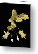 Precious Gem Greeting Cards - Gold Fuchsia Flowers On A Black Background Greeting Card by Mike Hill