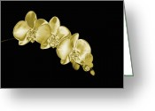 Precious Gem Greeting Cards - Gold Phaelenopsis Orchid On A Black Background Greeting Card by Mike Hill