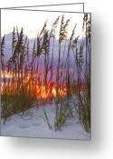 Florida Sunset Greeting Cards - Golden Amber Greeting Card by Janet Fikar
