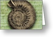 Shell Texture Greeting Cards - Golden Ammonite Greeting Card by Ramneek Narang