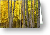 Colorado Photographers Greeting Cards - Golden Aspen Crop Greeting Card by Paul Gana