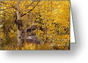 Turning Leaves Greeting Cards - Golden Aspen Stand Greeting Card by Michael Kirsh
