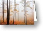 Evgeni Dinev Greeting Cards - Golden Autumn Forest Greeting Card by Evgeni Dinev