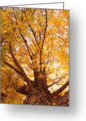 Fall Photographs Greeting Cards - Golden Autumn View Greeting Card by James Bo Insogna