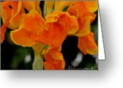 Canna Greeting Cards - Golden Canna Greeting Card by Patrick  Short