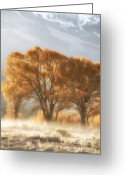 Landscape Photographs Greeting Cards - Golden Cottonwoods and Morning Fog Greeting Card by Heather Swan