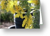 Tree. Acacia Greeting Cards - Golden Days Greeting Card by photo by Marcia Luly