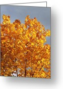 Gray Sky Greeting Cards - Golden Days Greeting Card by Will Borden